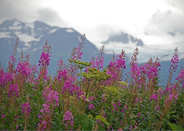 Alaska Greeting Card featuring the photograph Fireweed by Jim Cook