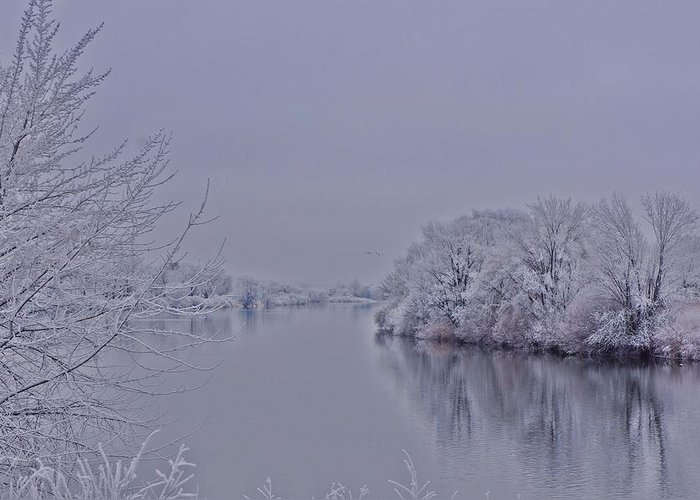 Frost Greeting Card featuring the photograph First Frost by Lynn Hopwood