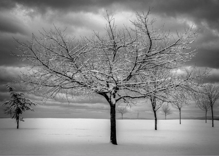Landscape Greeting Card featuring the photograph First Snow by Randy Hall