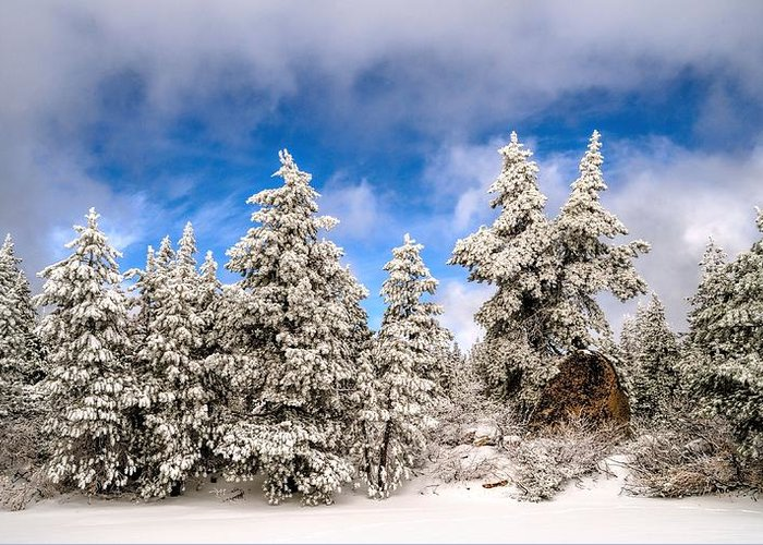 Snow Greeting Card featuring the photograph First Snowfall by Don Bendickson