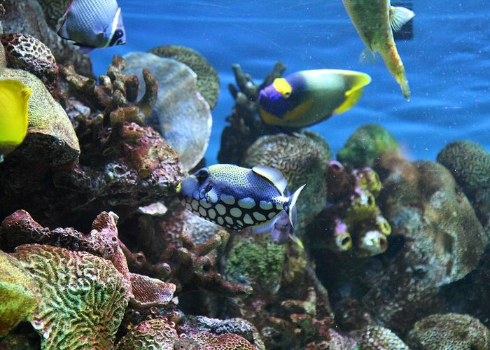 Inner Greeting Card featuring the photograph Fish - National Aquarium In Baltimore Md - 1212113 by DC Photographer