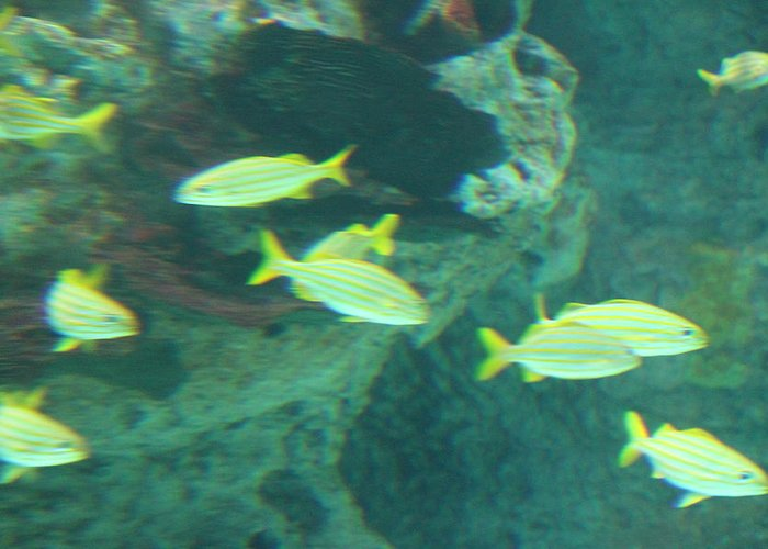 Inner Greeting Card featuring the photograph Fish - National Aquarium In Baltimore Md - 1212141 by DC Photographer