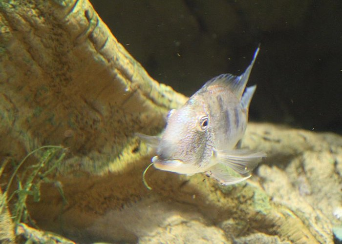 Inner Greeting Card featuring the photograph Fish - National Aquarium In Baltimore Md - 121248 by DC Photographer