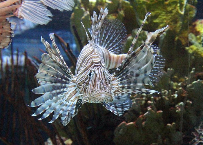 Inner Greeting Card featuring the photograph Fish - National Aquarium In Baltimore Md - 121266 by DC Photographer