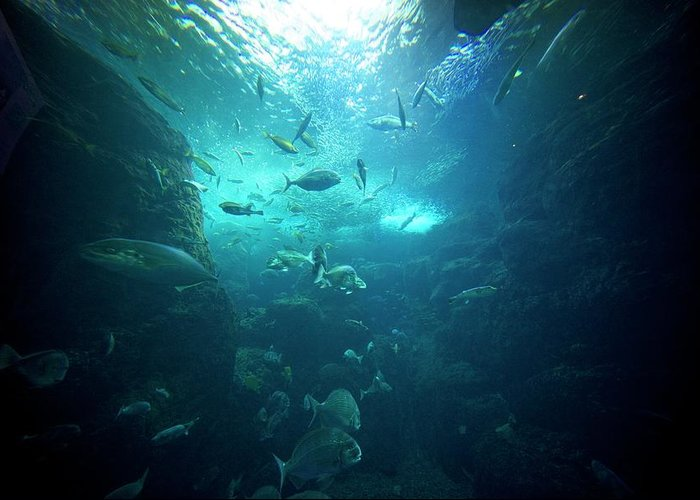 Underwater Greeting Card featuring the photograph Fishes by By Tddch