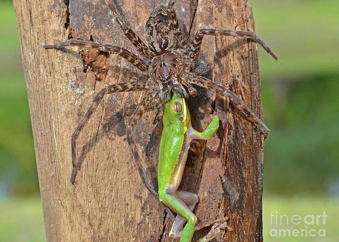 Fishing Spider Greeting Card For Sale By John Serrao