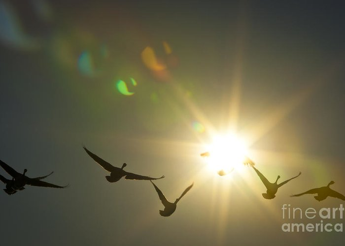 Sun Greeting Card featuring the photograph Flare Or Fowl by Roger Bailey