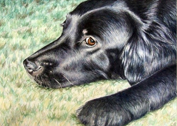 Dog Greeting Card featuring the painting Flat Coated Retriever by Nicole Zeug