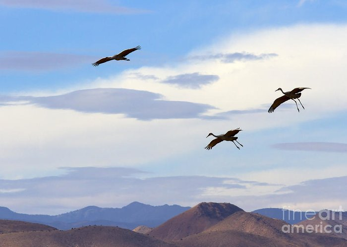 Sandhill Crane Greeting Card featuring the photograph Flight Of The Sandhill Cranes by Mike Dawson