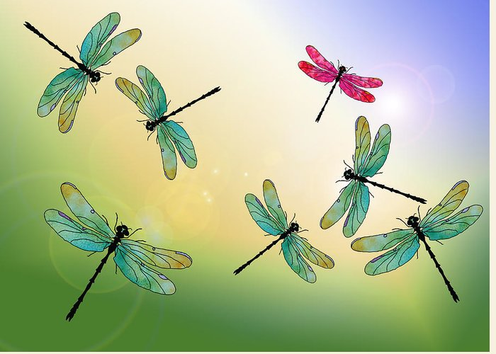 Flying Insect Greeting Cards
