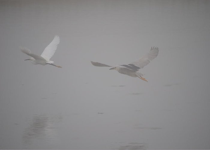Heron Greeting Card featuring the photograph Flight by Paulina Roybal