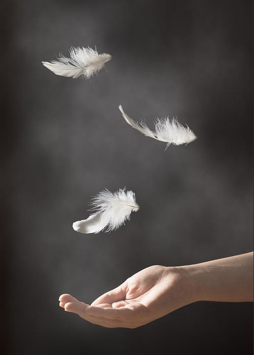 Floating Greeting Card featuring the photograph Floating Feathers by Amanda Elwell