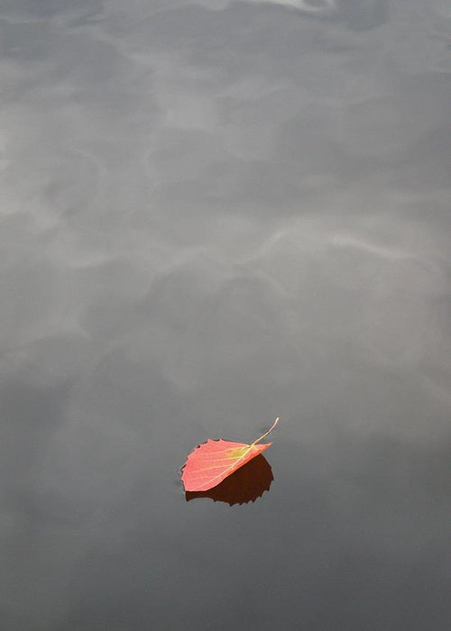 Floating Jewel Greeting Card featuring the photograph Floating Jewel by Jake Barbour