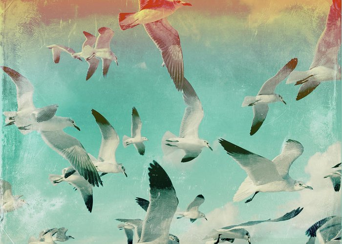 Animal Themes Greeting Card featuring the photograph Flock Of Seagulls, Miami Beach by Michael Sugrue