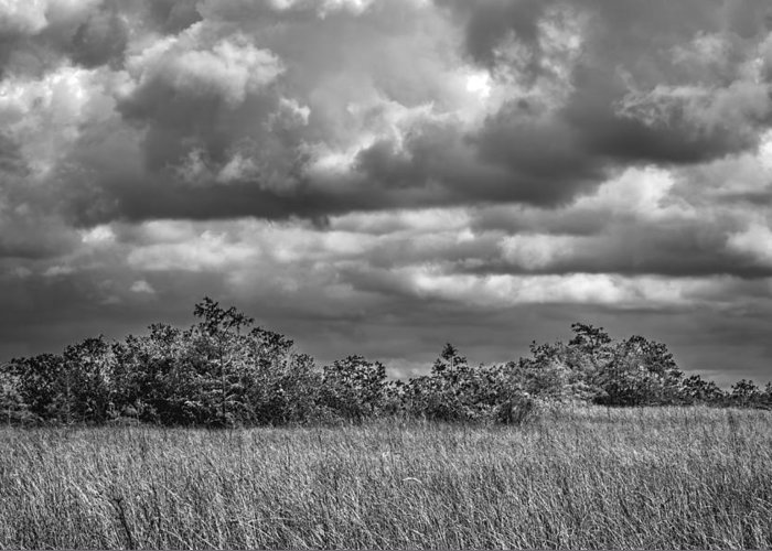 Bush Greeting Card featuring the photograph Florida Everglades 0184bw by Rudy Umans