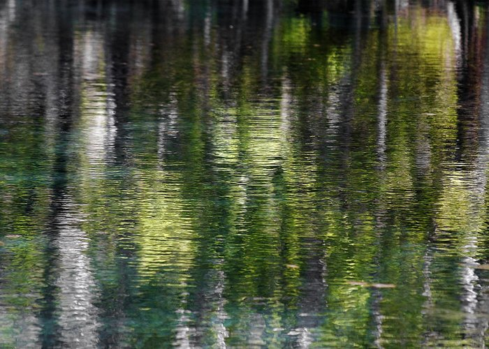 Silver Greeting Card featuring the photograph Florida Silver Springs River by Christine Till