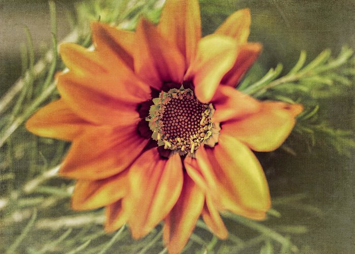 Flower Beauty Greeting Card featuring the photograph Flower Beauty I by Marco Oliveira