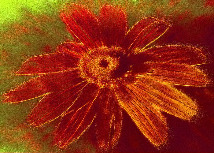 Flower Greeting Card featuring the photograph Flower Burst by Susan Elizabeth Dalton