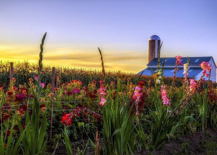 Mark Papke Greeting Card featuring the photograph Flower Farm by Mark Papke