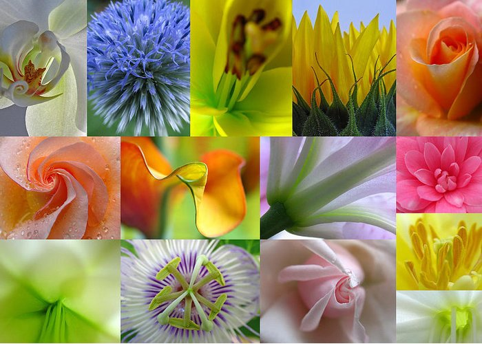 Artwork Greeting Card featuring the photograph Flower Macro Photography by Juergen Roth