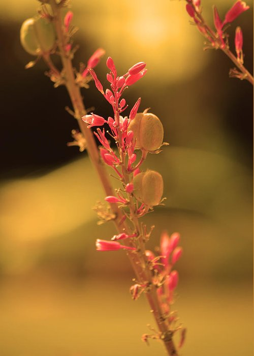 Pink Flower Greeting Card featuring the photograph Flower Of Light by Deprise Brescia