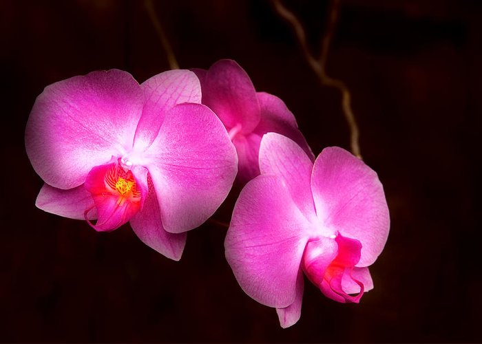 Orchid Greeting Card featuring the photograph Flower - Orchid - Better In A Set by Mike Savad