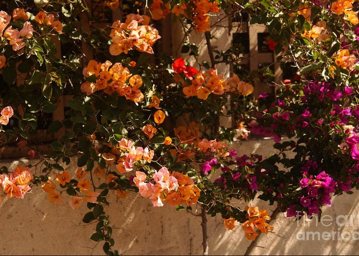 Trellis Greeting Card featuring the photograph Flower Trellis In La Jolla by Anna Lisa Yoder