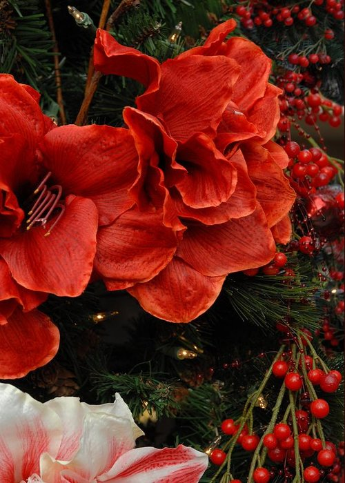 Amaryllis Greeting Card featuring the photograph Flowers 554 by Joyce StJames
