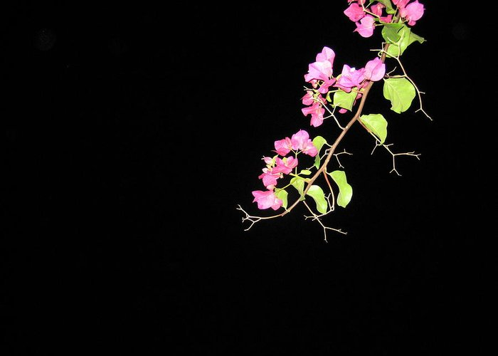 Patio Greeting Card featuring the photograph Flowers And Darkness by Panos Spiliadis