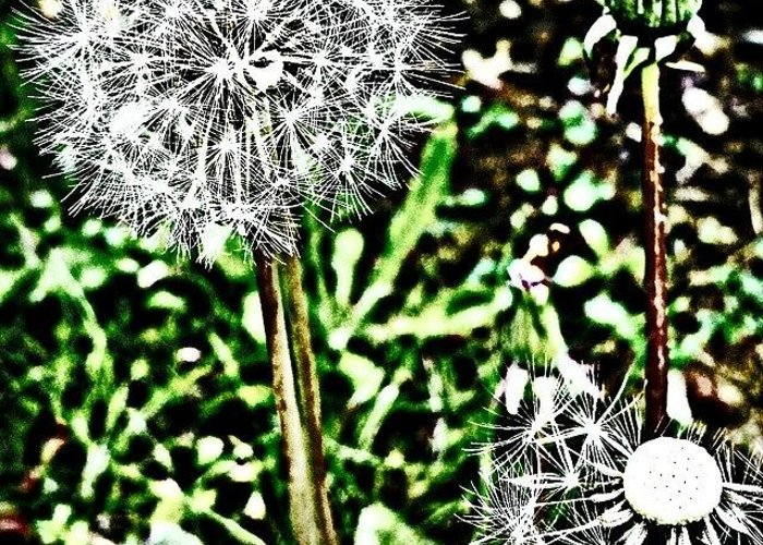 Beautiful Greeting Card featuring the photograph Dandelions by J Roustie