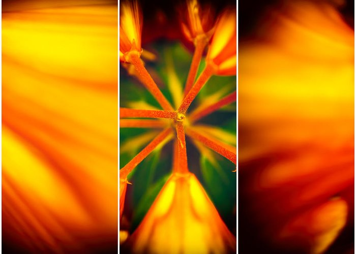 Flower Greeting Card featuring the photograph Flow'ers by Mihai Ilie