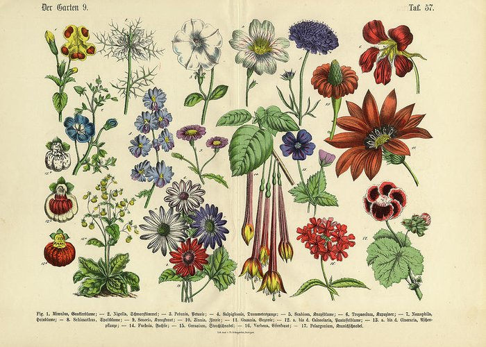 Lantana Greeting Card featuring the digital art Flowers Of The Garden, Victorian by Bauhaus1000