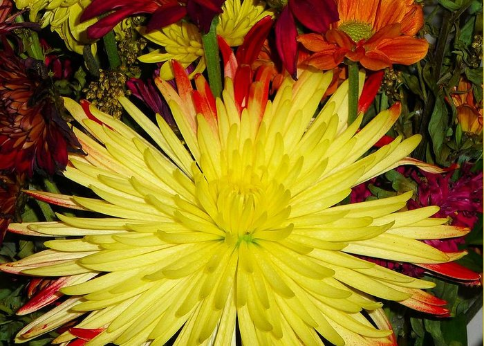 Flowers Greeting Card featuring the photograph Flowers Yellow by Carol McKenzie