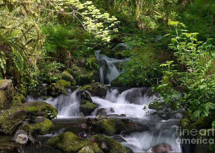 Rivers Greeting Card featuring the photograph Flowing Creek In Spring by Jackie Follett