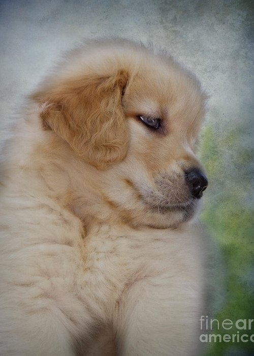 Golden Retriever Greeting Card featuring the photograph Fluffy Golden Puppy by Susan Candelario