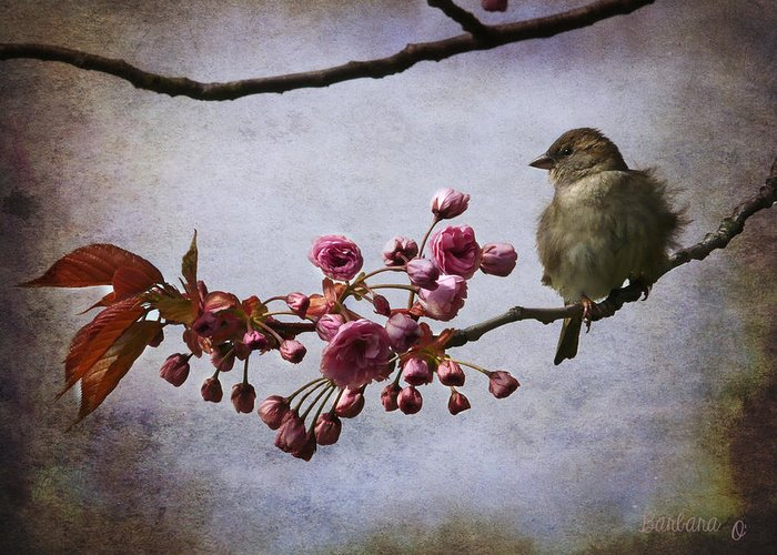 Sparrow Greeting Card featuring the photograph Fluffy Sparrow by Barbara Orenya