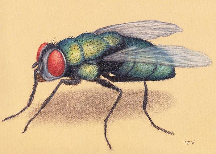 Цветные картинки муха