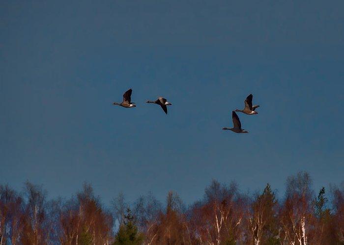 Bird Greeting Card featuring the photograph Flyers -leif Sohlman by Leif Sohlman