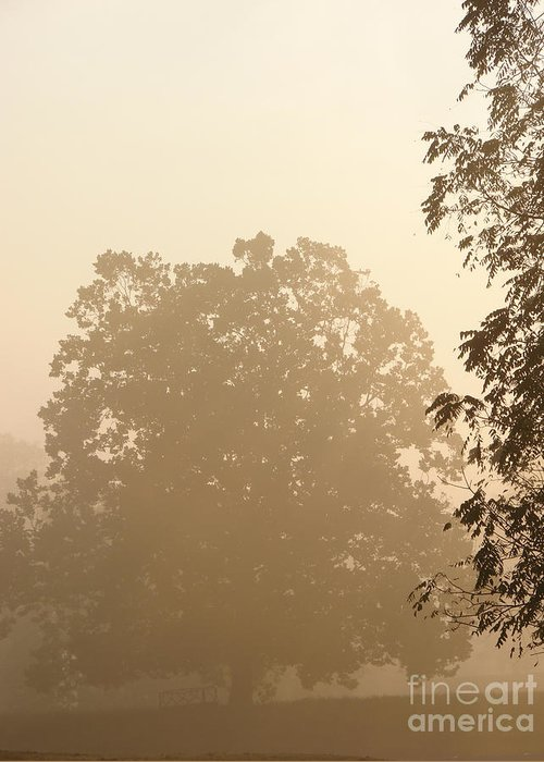 Tree Greeting Card featuring the photograph Fog Over Countryside by Olivier Le Queinec