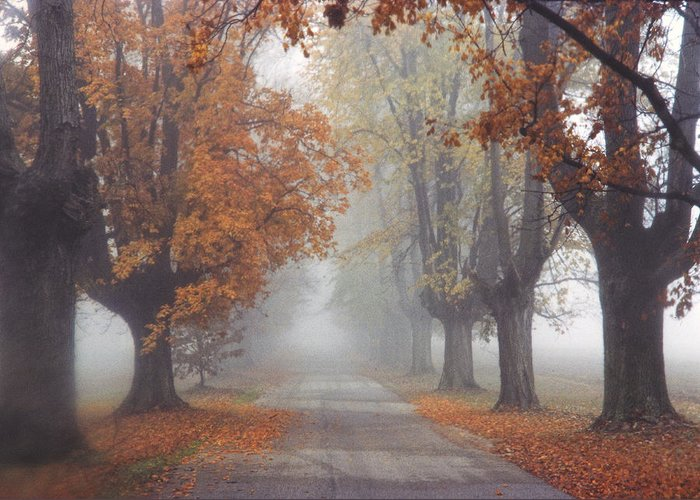 Kentucky Greeting Card featuring the photograph Foggy Driveway by Wendell Thompson