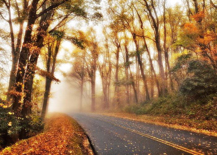 Blue Ridge Parkway Greeting Card featuring the photograph Foggy Fall Wonderland - Blue Ridge Parkway I by Dan Carmichael