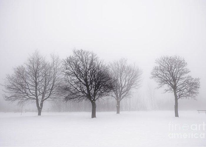 Trees Greeting Card featuring the photograph Foggy Park With Winter Trees by Elena Elisseeva