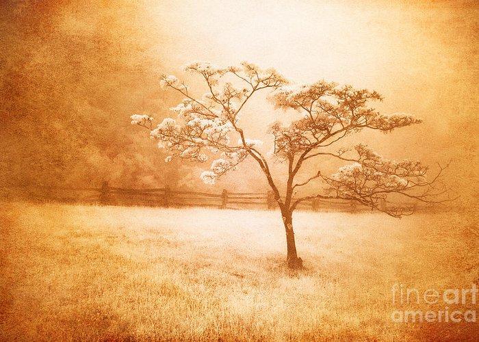 Blue Ridge Mountains Greeting Card featuring the painting Foggy Spring In The Blue Ridge Mountains by Dan Carmichael