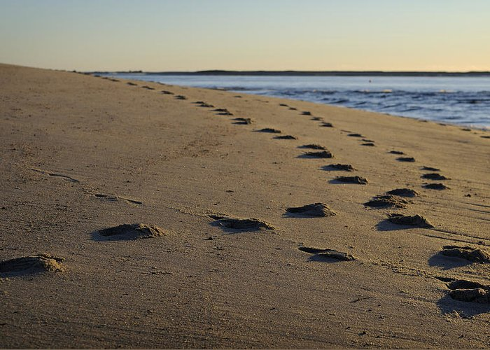 Beach Greeting Card featuring the photograph Follow Your Path by Luke Moore