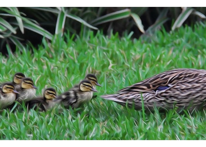 Make Way For The Ducklings Greeting Card featuring the photograph Following Mommy by Lee Dos Santos