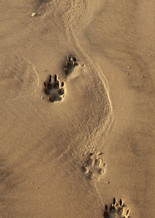Dog Greeting Card featuring the photograph Following My Dog by Larisa Kroshkin