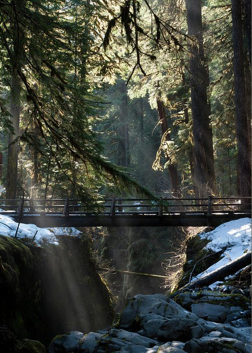 Art Wolfe Greeting Card featuring the photograph Footbridge Near Sol Duc Falls, Olympic by Art Wolfe