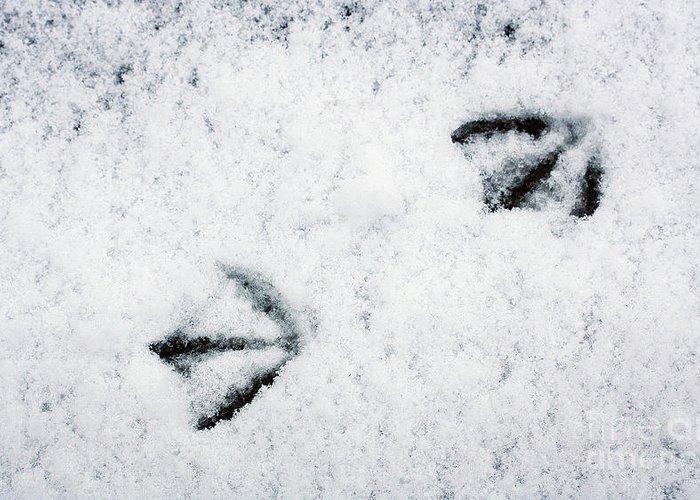 Footprints In The Snow Greeting Card featuring the photograph Footprints In The Snow by Jolanta Meskauskiene