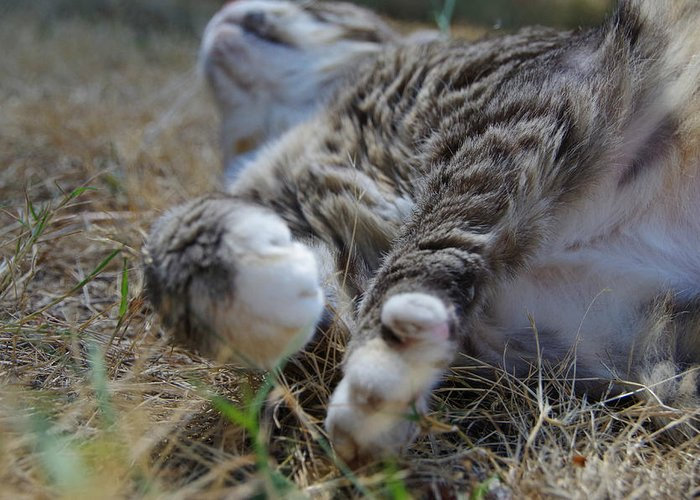 Cat Greeting Card featuring the photograph For The Love Of Stretching by Marilyn Wilson