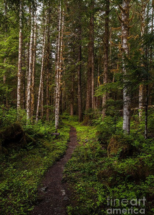 Northwest Greeting Card featuring the photograph Forest Alder Path by Mike Reid